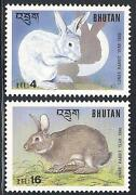 1999 Year of The Rabbit