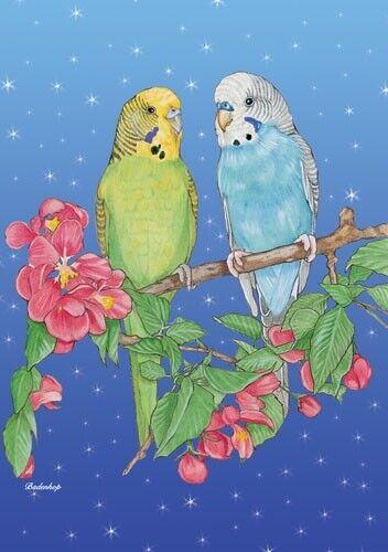 Parakeet Budgie Parrot Christmas Cards Set of 10 cards & 10 envelopes