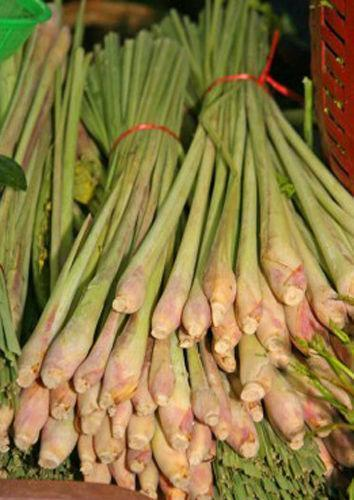 antibacterial property of lemongrass leaves cymbopogon Essential oils are aromatic substances obtained from various plant parts by  steam  lemongrass (cymbopogon citratus) is widely used in traditional  medicine in many  among its attributable properties are those related to  antibacterial and.