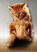 Fototapete Katze