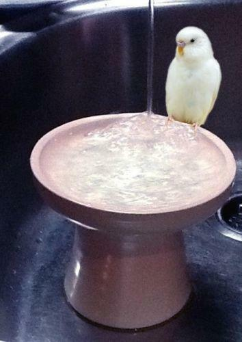 Small Bird Bath Ebay