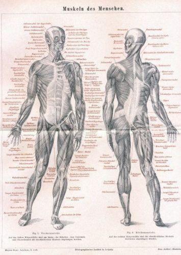 Vintage Anatomy Poster Ebay