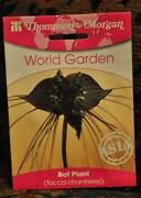 House Plant Seeds