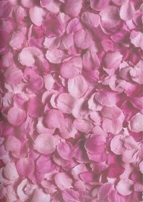 PINK PETALS Rose 12 x 12 Scrapbook Paper - 2 Sheets - Pink Scrapbook Paper