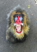 Taxidermy Monkey