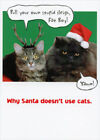 Recycled Paper Greetings Cats Greeting Cards & Invitations