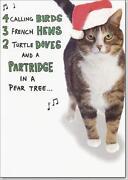 Bird Christmas Cards
