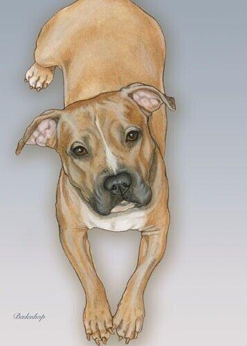 Pit Bull Blank Note Card