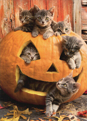 Kittens In Jack O Lantern - Avanti Cat Halloween Card by Avanti Press - Halloween Card Animated