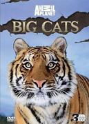 Big Cats DVD