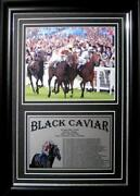 Black Caviar Framed