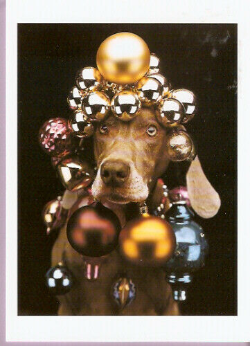 Weimaraner Weim Wegman Christmas Cards Pack of 12 Ornamental Ornament*