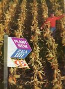 Funks Seed