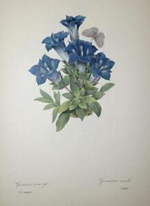 Botanical Print Book