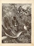 Antique Birds Nest Prints
