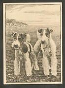 Dog Cigarette Cards