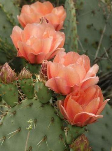 Large Cactus Ebay
