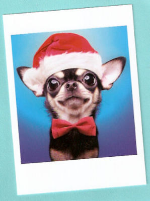 Chihuahua Santa - Chihuahua Santa Elf Smile Bowtie Christmas Cards Box of 12