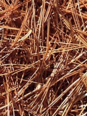 Best Smoker Fuel Honey Bee Keeping Bees Hive Smoke Natural Pine Needles