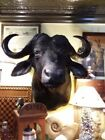Unbranded Buffalo Shoulder Mount Large Animal Taxidermy