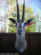 Gazelle Horns