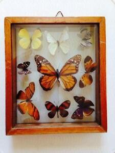 framed butterflies glass