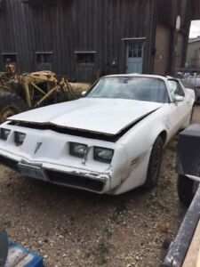 81 turbo trans am project car