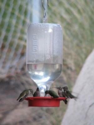 Best 1 Hummingbird Feeder 72 OZ EZ Clean EZ Fill Bird