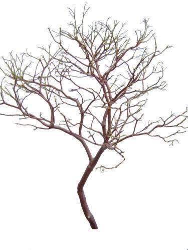 Manzanita Tree Centerpieces | eBay