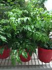 Medium (Desk/Floor) House Plants