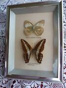 Schmetterlinge Hinter Glas