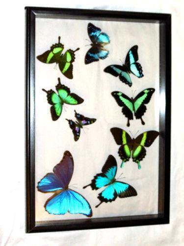 Framed Blue Butterfly Ebay