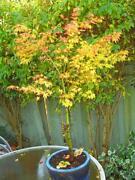 Japanese Plant Pot