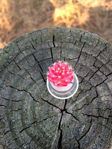 Live Miniature Plants Ebay