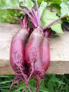 Heirloom Vegetable Seeds - Canada- FREE SHIPPING over $50