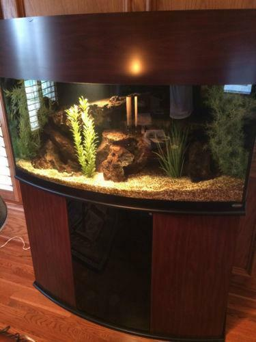 Bow front aquarium stand ebay for Bow front fish tank