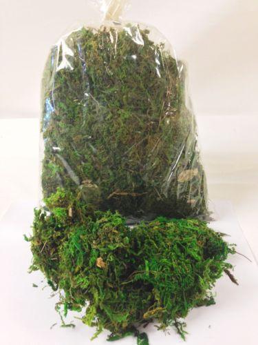 Artificial Moss Floral Decor Ebay