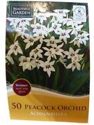 Orchid Bulbs