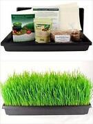 Wheatgrass Kit