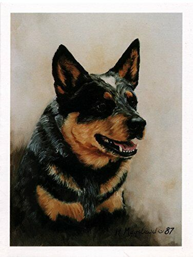 New Australian Cattle Pet Dog Notecards 6 Note Cards 6 Envelopes Ruth Maystead
