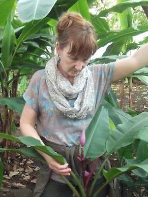 Rosa Banane gesunde vegetarische Ernährung Nahrungsmittel zum Abnehmen für Diät