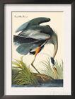 John James Audubon Birds Art Prints