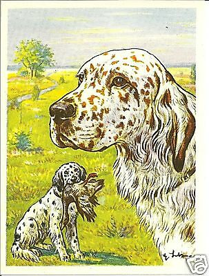 1952 Rare Dog Art Print Austria Tobacco Company Bildwerk Card ENGLISH SETTER