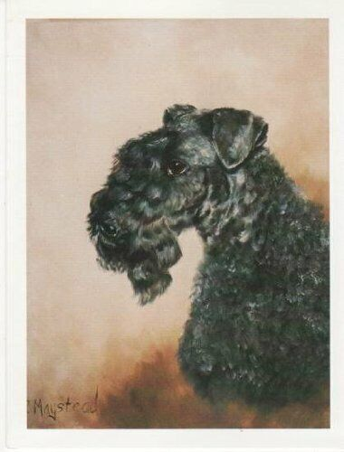 Kerry Blue Terrier Pet Dog Head Study 6 Notecards & 6 Envelopes By Ruth Maystead