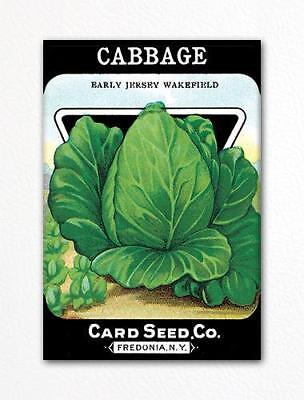 Cabbage Seed Packet Artwork Fridge -