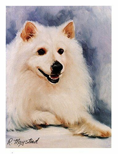 New American Eskimo Head Study Notecards 12 Note Cards By Ruth Maystead AEK-1