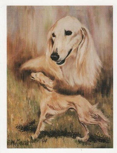 Saluki Double Image Notecard Set 12 Notecards Envelopes By Ruth Maystead SAL-2