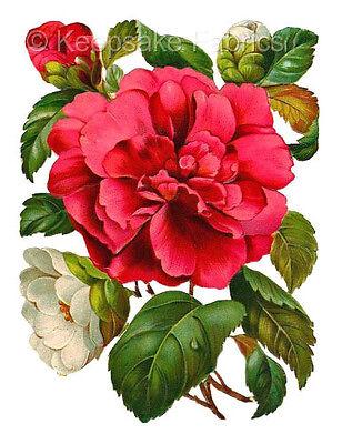 Pink Chrysanthemum Bouquet Fabric Block Multi Sizes FrEE ShiPPinG WoRld WiDE ()