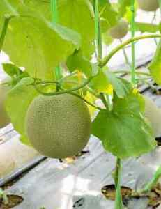 Heirloom Vegetable Seeds - Canada - FREE SHIPPING over $50