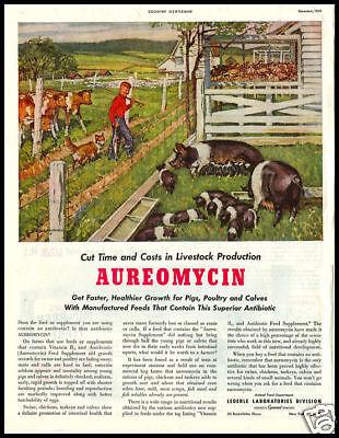 1951 vintage ad for Aureomycin
